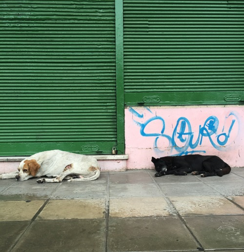 La Boca - Dog Day Afternoon
