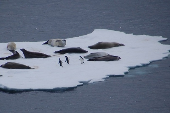 Antarctica - Penguins & Seals