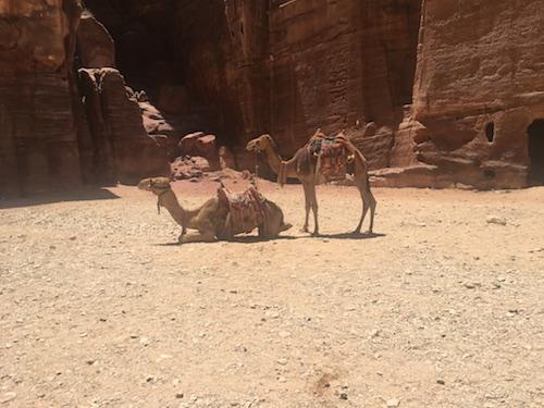 Petra - 10 - Camels