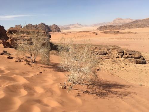 Wadi Rum - 07 - Desert Sagebrush
